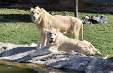 Dubai's $272m safari park opens