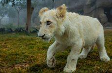 Dubai Safari welcomes 175 newborn animals