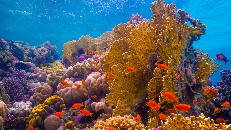 البحر الأحمر السعودية