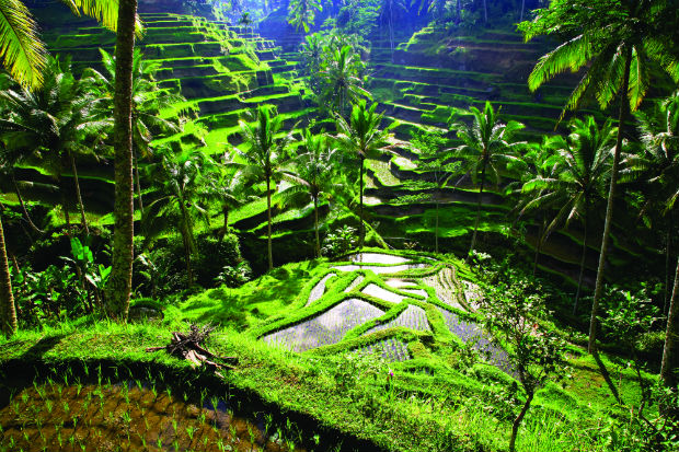 Travel Review: Soul Searching In Ubud