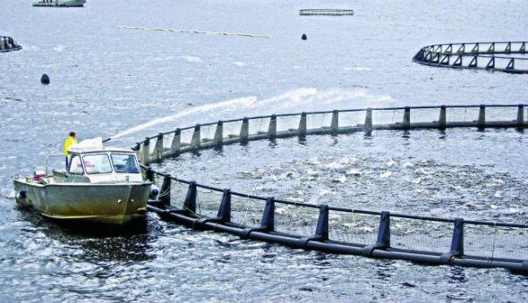 UAE Salmon Farms: A Big Catch
