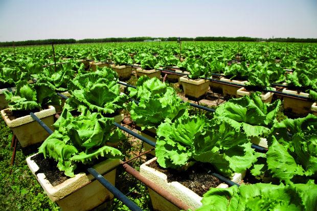 The GCC's Food Security Dilemma