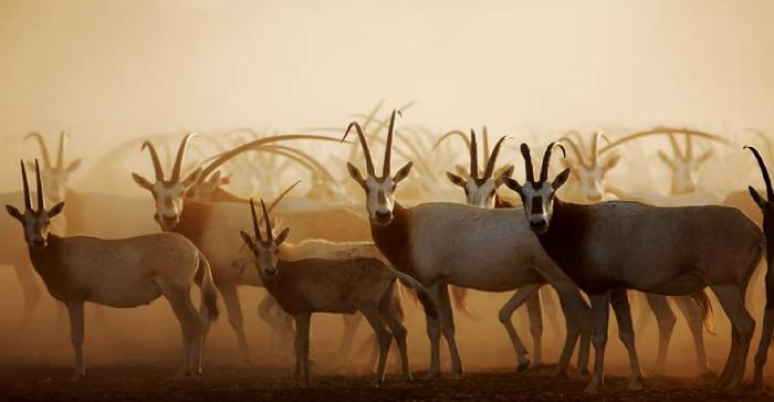 Dubai's Ruler Issues Decree To Establish Six New Wildlife Sanctuaries